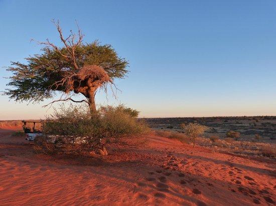 Bagatelle Kalahari Game Ranch: Landschaft