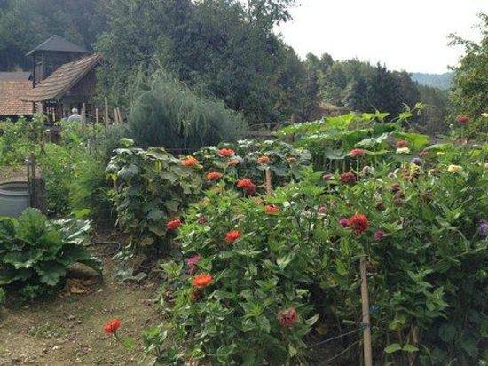 Pri Lazarju: Garden and lodging