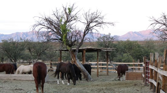 Tombstone Monument Ranch: Corral