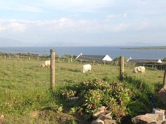 Ceann Tra Heights Bed and Breakfast : i cannot get over the view! sheep!