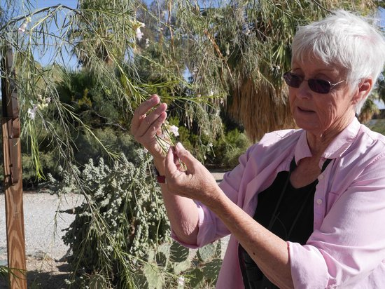 29 Palms Inn: Enjoy free nature walks with Pat our naturalist, weekend mornings