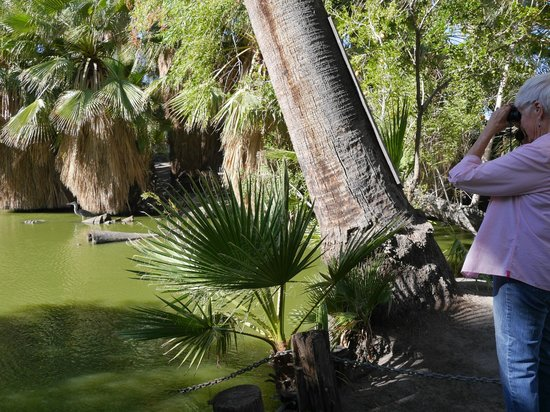 29 Palms Inn: Discover wildlife around the pond at the Oasis of Mara