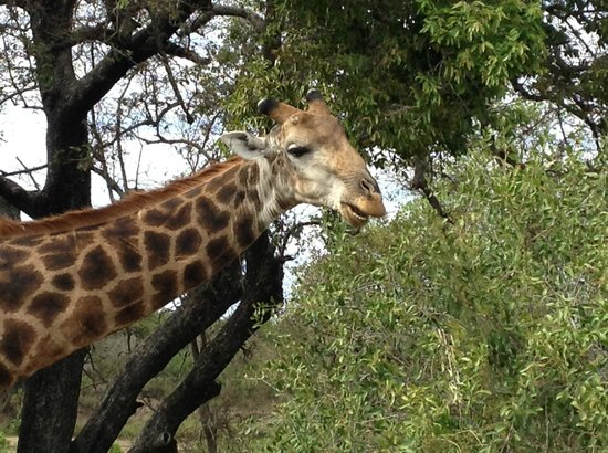 Wild Wings Safaris: Whatsapp?