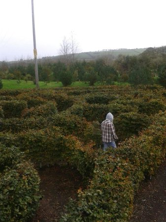 The Hidden Valley Discovery Park: A maze ing