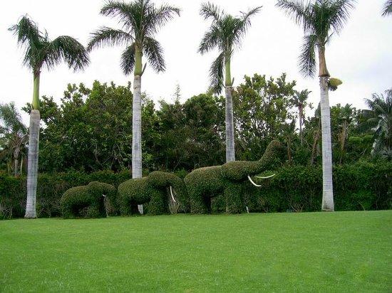Hotel Trianflor: Loro Park,Puerto de la Cruz