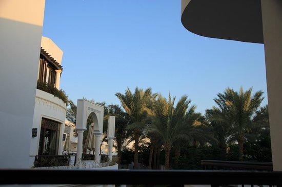 Jaz Fanara Resort & Residence : мои любимые пальмочки