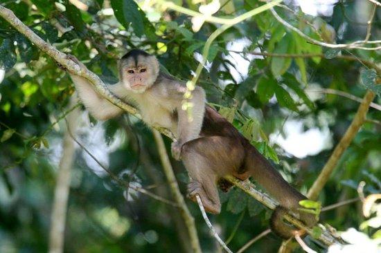 Napo Wildlife Centre: monkey