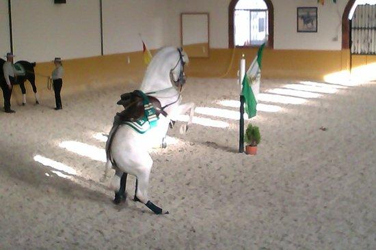 Centro de Equitación El Ranchito: horses