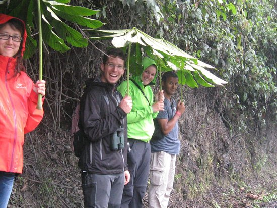 Amazon Tours Peru - Private Day Tour: cloud forest of Manu National Park