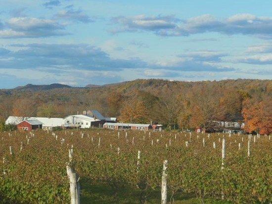 Gouveia Vineyards: Gouveia Winery View