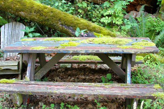 The Fraser River's Edge B&B Lodge: grounds of the B&B