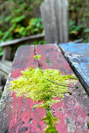 The Fraser River's Edge Bed & Breakfast Lodge: old picnic table on the grounds of the B&B