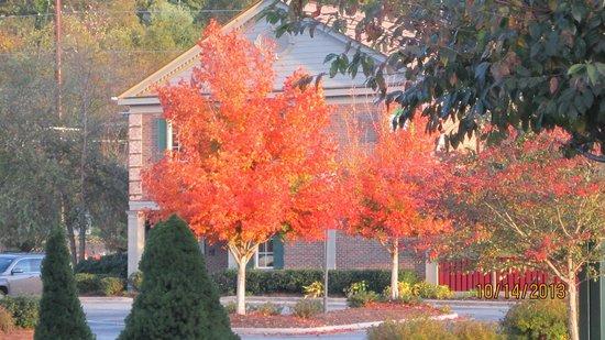 Carolina Country Inn: Just across the street from my room, Fall foliage
