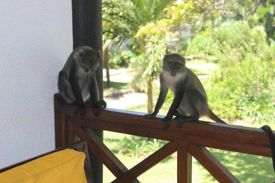 Leopard Beach Resort & Spa: Besucher unseres Balkons