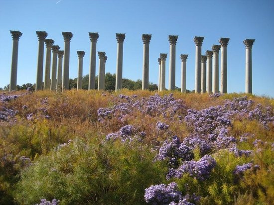 U.S. National Arboretum: The columns on a sunny fall day
