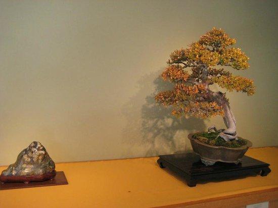 U.S. National Arboretum : Autumn Bonsai exhibit at the National Bonsai museum