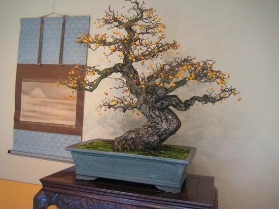 U.S. National Arboretum : A bonsai on display for the Autumn bonsai exhibit