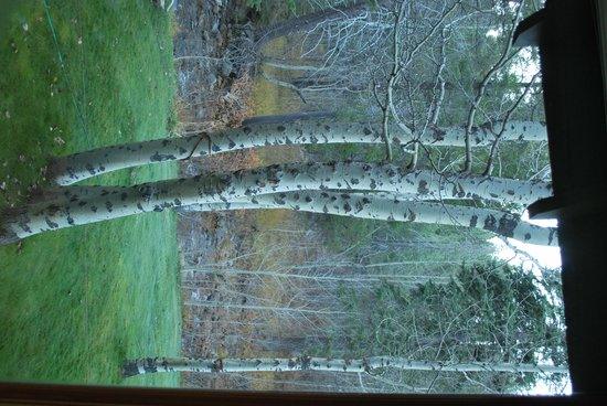 High Country Inn : Beautiful Aspens outside the window in the Golden Pond room