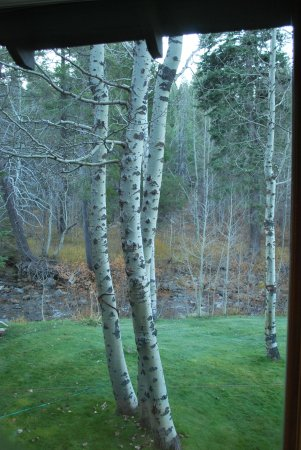 High Country Inn: Beautiful Aspens outside the window in the Golden Pond room