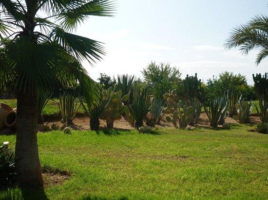 Villa Malika Silvana: Jardin
