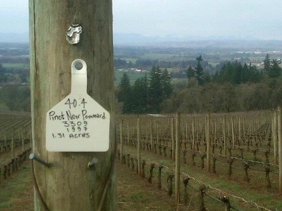 Stoller Vineyards Guest Houses: Hiking the vineyard grounds.