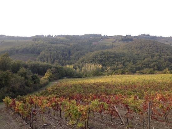 Agriturismo Podere Tegline : Виноградники в Лукарелли