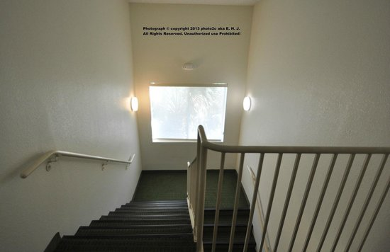 Fairfield Inn & Suites Ocala: The Hotel stairs with large windows to let in natural light. Good Idea