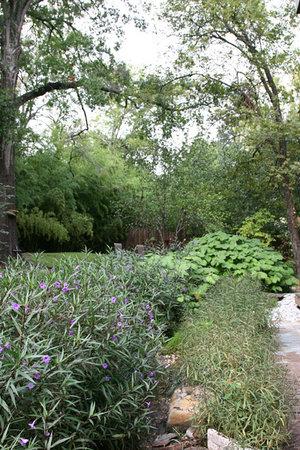 Abigaile's Treehouse: Lush garden