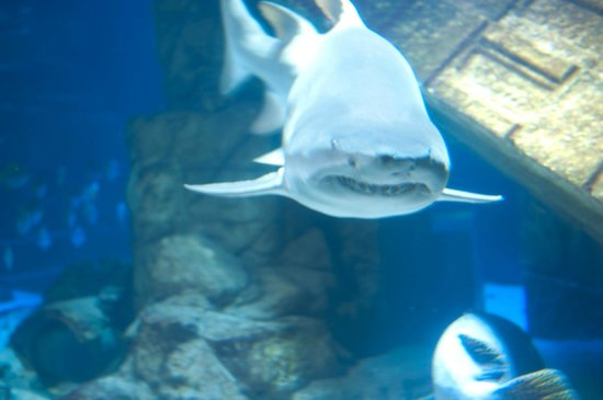 Lion Fish Picture Of Long Island Aquarium Exhibition