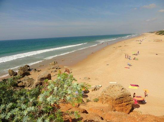 Timon de Roche: Desde la Cala de Roche la larguisima y limpisima playa La Barrosa