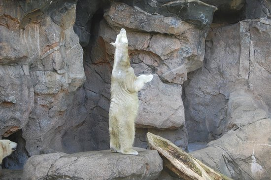 Cincinnati Zoo & Botanical Garden: They feed the polar bears from above