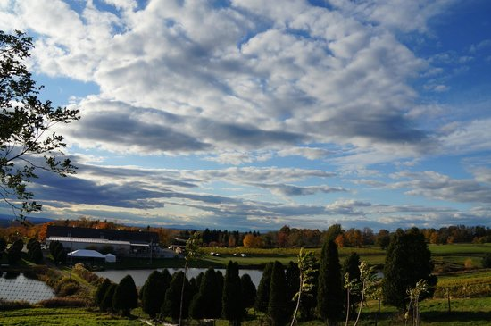 Millbrook Vineyards & Winery: View from the hill