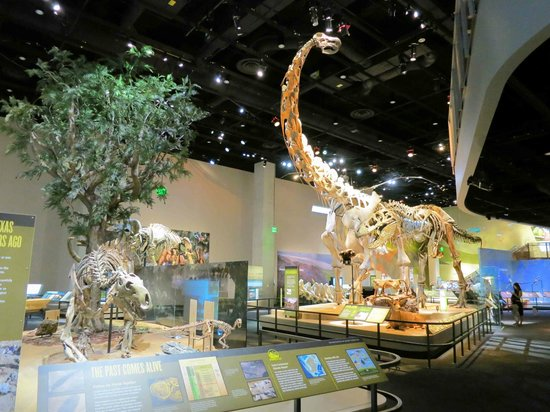 Perot Museum of Nature and Science: Dinosaur Hall at the top