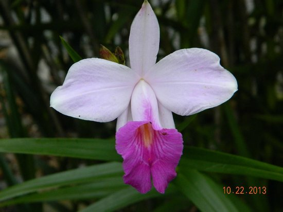 The Guest Suites at Manana Madera Coffee Estate : Beautiful flower