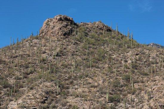 Loews Ventana Canyon Resort: view from room