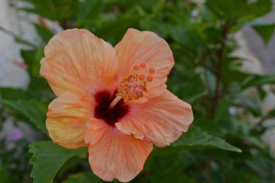 Royal Horizons Boa Vista : Plantes ornant les chemins d'accès vers les chambres et la plage