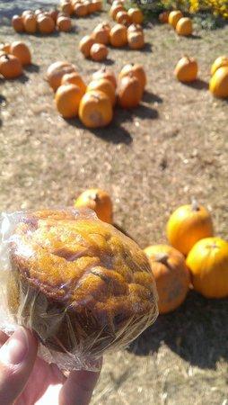 Modena, นิวยอร์ก: Pumpkin Chocolate Chip Muffins