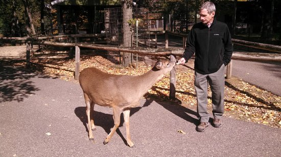 Wisconsin Deer Park : deer gently taking food from his hand
