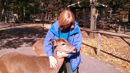 Wisconsin Deer Park : deer allowing a close encounter