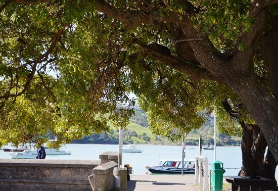 Akaroa Fish and Chips: This is the kind of thing you see..trees and ocean!