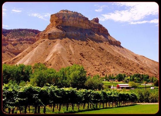 Palisade, CO : Canyon Wind Winery