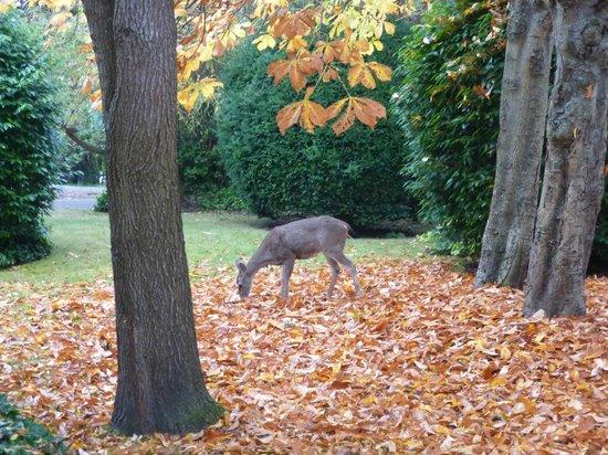 Abbeymoore Manor Bed and Breakfast Inn : Deer in yard across the street
