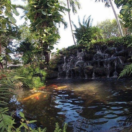 Almond Tree Inn: Beautiful koi pond!