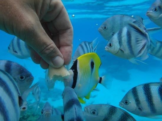 Four Seasons Resort Bora Bora: la laguna