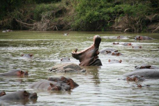 Ngorongoro Conservation Area, Tanzania: Hippo Pool