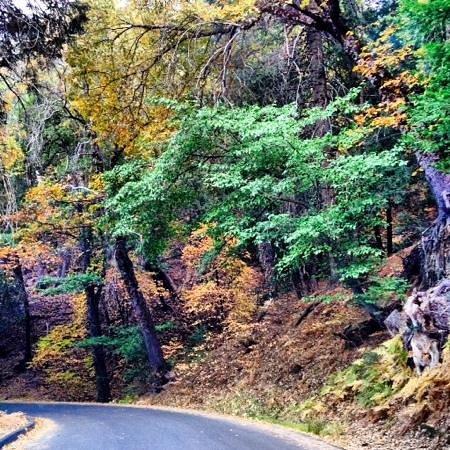 Palomar Mountain State Park: palomar fall colors