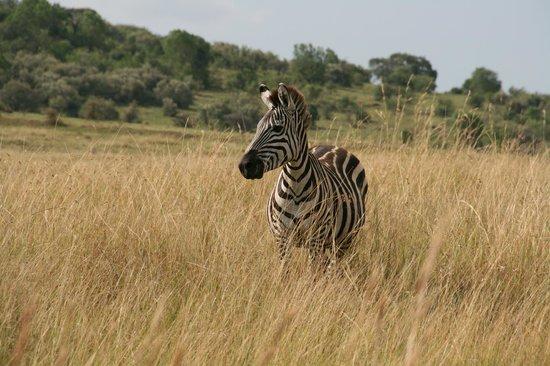 Ngorongoro Conservation Area, Tanzania: Alone at Last