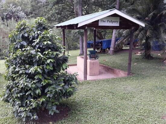 Sabie Valley Coffee Farm: the pulpery