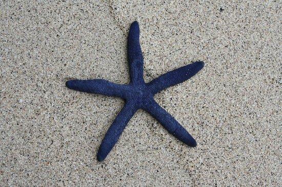 Satuiatua Beach Resort : Found on the beach