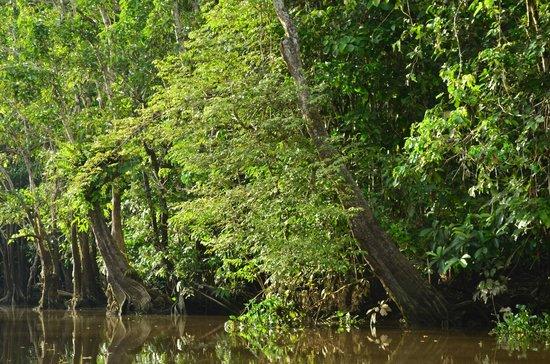 Sukau RB Lodge: A piece of The Kinabatangan River